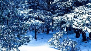 winter_forest